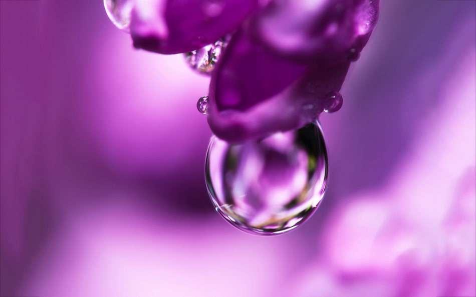 gota_flor_violeta